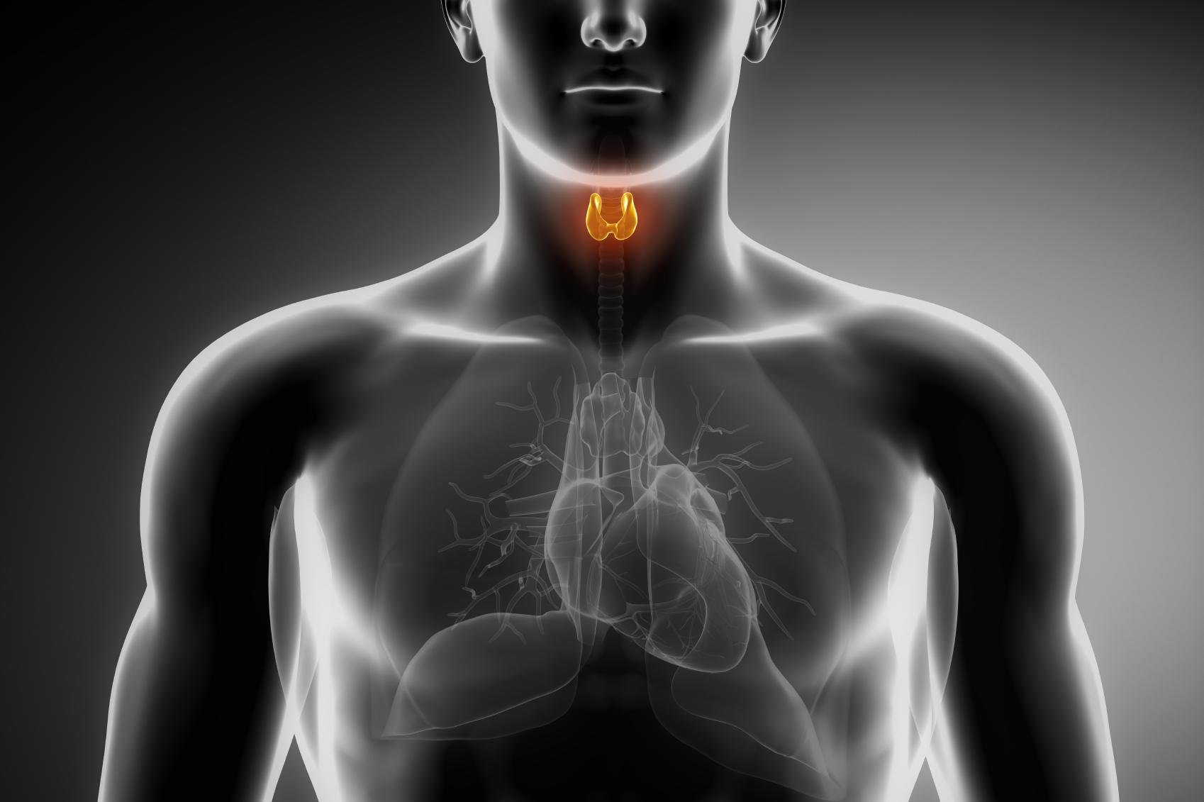 Male thyroid anatomy